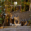 Brazil Destination Spotlight - Pantanal