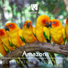 Brazil Destination Spotlight - Amazon