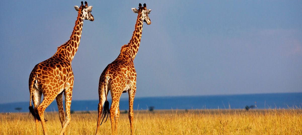 Wildlife and Luxury in Kenya