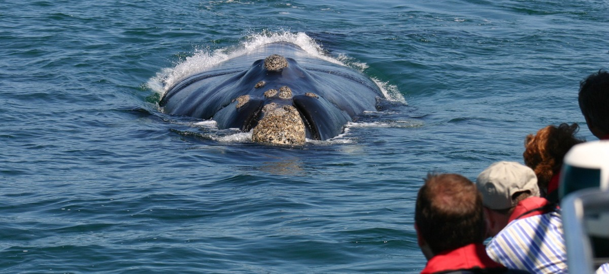 Day Tour - Hermanus Whale watching